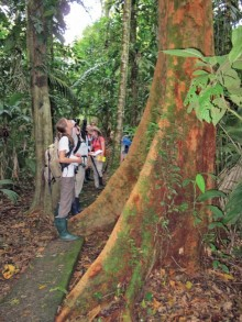 In the rainforest classroom